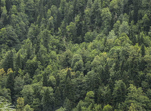MOH_Website_Environment_FiberForests_Thumbnail2.jpg